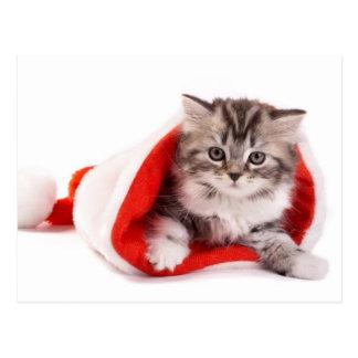 Postal Gatito en un gorra de Santa