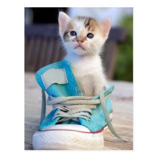 Postal Gatito en zapato azul
