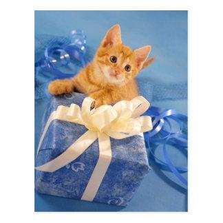 Postal Gatito rojo con el regalo