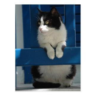 Postal Gato