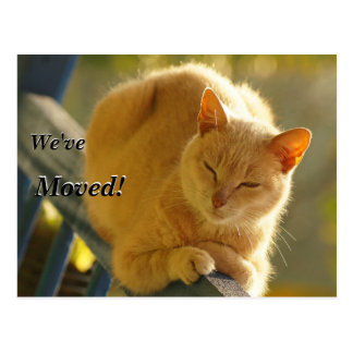 Postal Gato anaranjado y blanco hemos movido la nueva