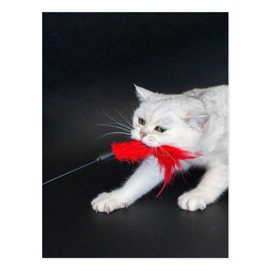 Postal Gato blanco que juega tirando del juguete rojo