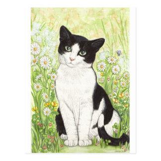 Postal Gato blanco y negro con las margaritas
