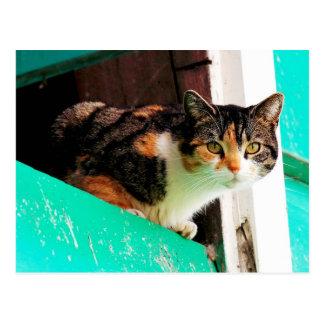 Postal Gato de calicó curioso en la repisa del aquamarine