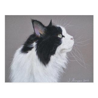 Postal Gato de Coon blanco y negro de Maine