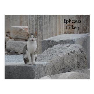 Postal Gato de Ephesus