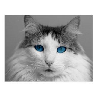 Postal Gato de ojos azules gris y blanco mullido