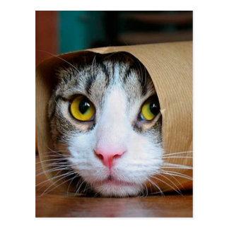 Postal Gato de papel - gatos divertidos - meme del gato -