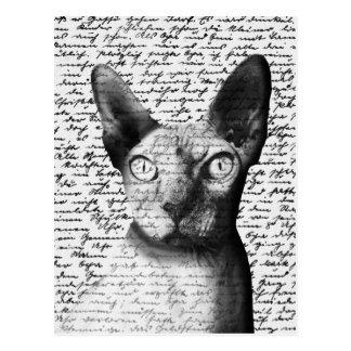 Postal Gato de Sphynx