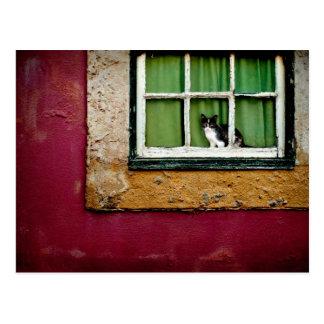 Postal Gato en la ventana