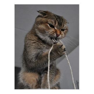 Postal Gato Flossing