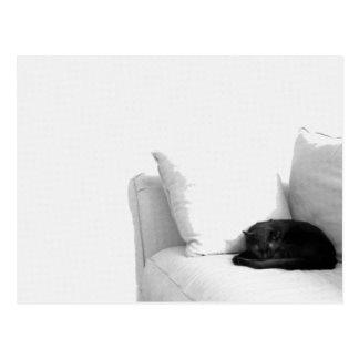 Postal Gato gris el dormir en el sofá blanco