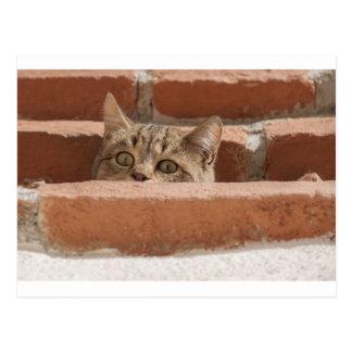 Postal Gato montés joven curioso de la atención de los