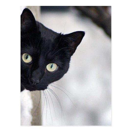 Postal Gato negro