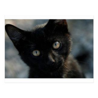 Postal Gato negro de la EEK asustadizo