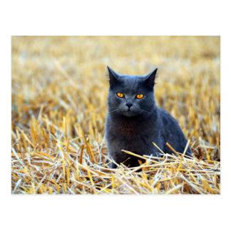 Postal Gato negro Naranja-Observado en campo
