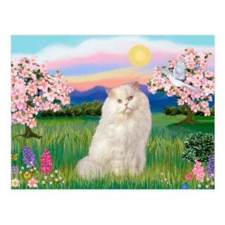 Postal Gato persa blanco - flores