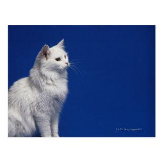 Postal Gato que se sienta contra fondo azul