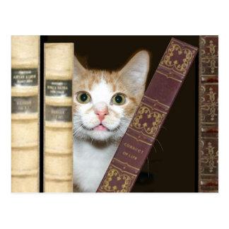 Postal Gato y libros