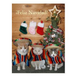 Postal Gatos/gatitos divertidos Feliz Navidad