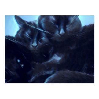 Postal Gatos negros el dormir