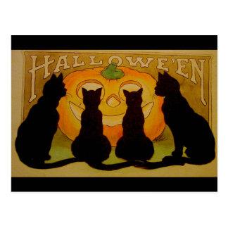 Postal Gatos negros y Jack O'Lantern de Halloween del