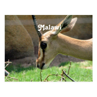Postal Gazelle de Malawi