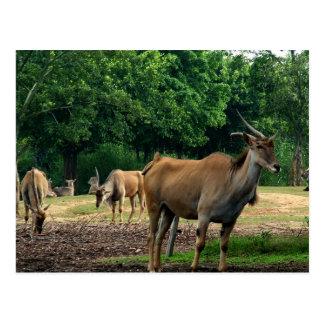 Postal Gazelles