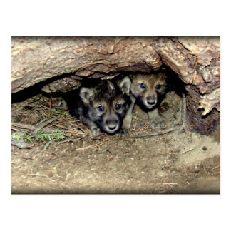 Postal Gemelo salvaje Cubs del lobo de madera en guarida