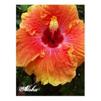 Postal gigante de la hawaiana del hibisco