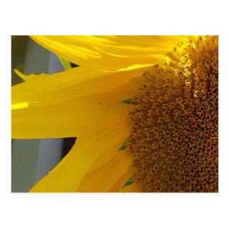 Postal Girasol amarillo brillante