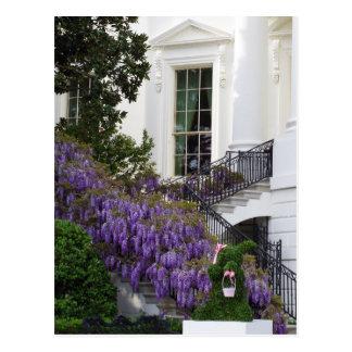 Postal Glicinias Pascua de la Casa Blanca del Washington