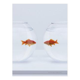 Postal Goldfish en los fishbowls separados que miran la