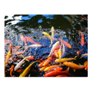 Postal Goldfish Kona Hawaii de Koi