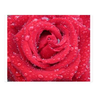 Postal gotitas de agua de los pétalos de los flores de