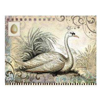 Postal Gráfico del cisne
