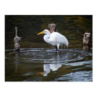 Postal Gran Egret
