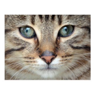 Postal grande del gatito del gato de Tabby de los