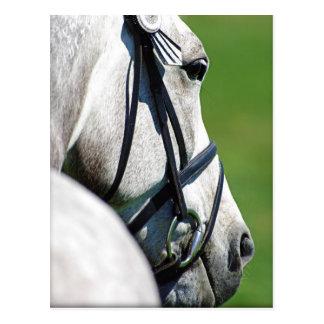 Postal gris del caballo