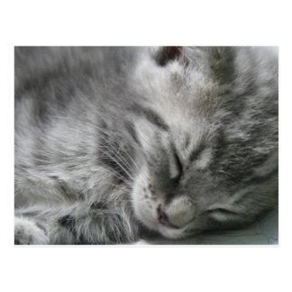 Postal gris el dormir del gatito