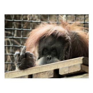 Postal grosera del orangután
