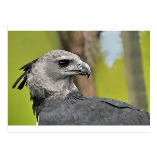 Postal Harpy Eagle 1.JPG