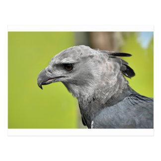 Postal Harpy Eagle 2.JPG