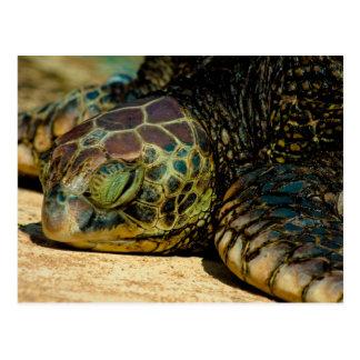 Postal hawaiana de reclinación de la tortuga de