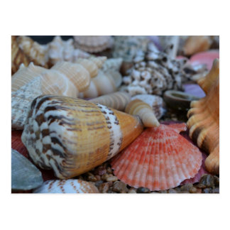 Postal hawaiana tropical de Shell