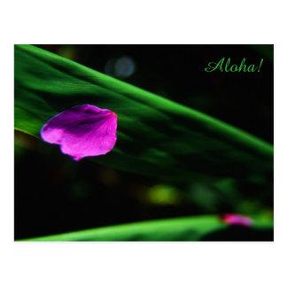 Postal Hawaii-- Pétalo de la flor del Plumeria en la hoja