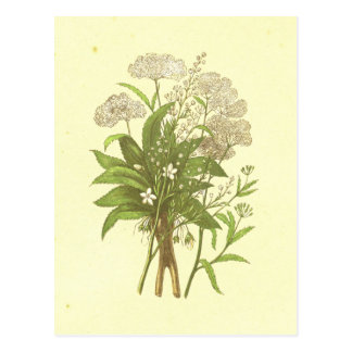 Postal Hemlock, Mandrake y litografía del vintage del