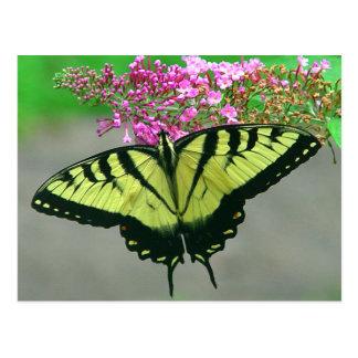 Postal hermosa 6 de la mariposa de Swallowtail del