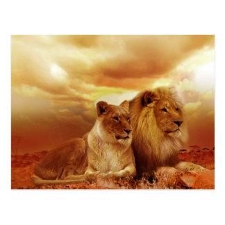 Postal hermosa de los pares del león