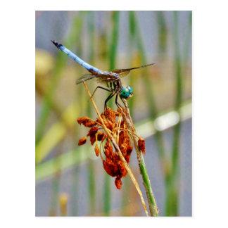 Postal Hierba de la juncia, y libélula